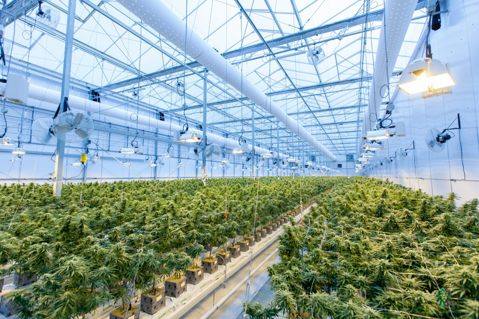 Why your grow facility needs a good MEP engineering partner
