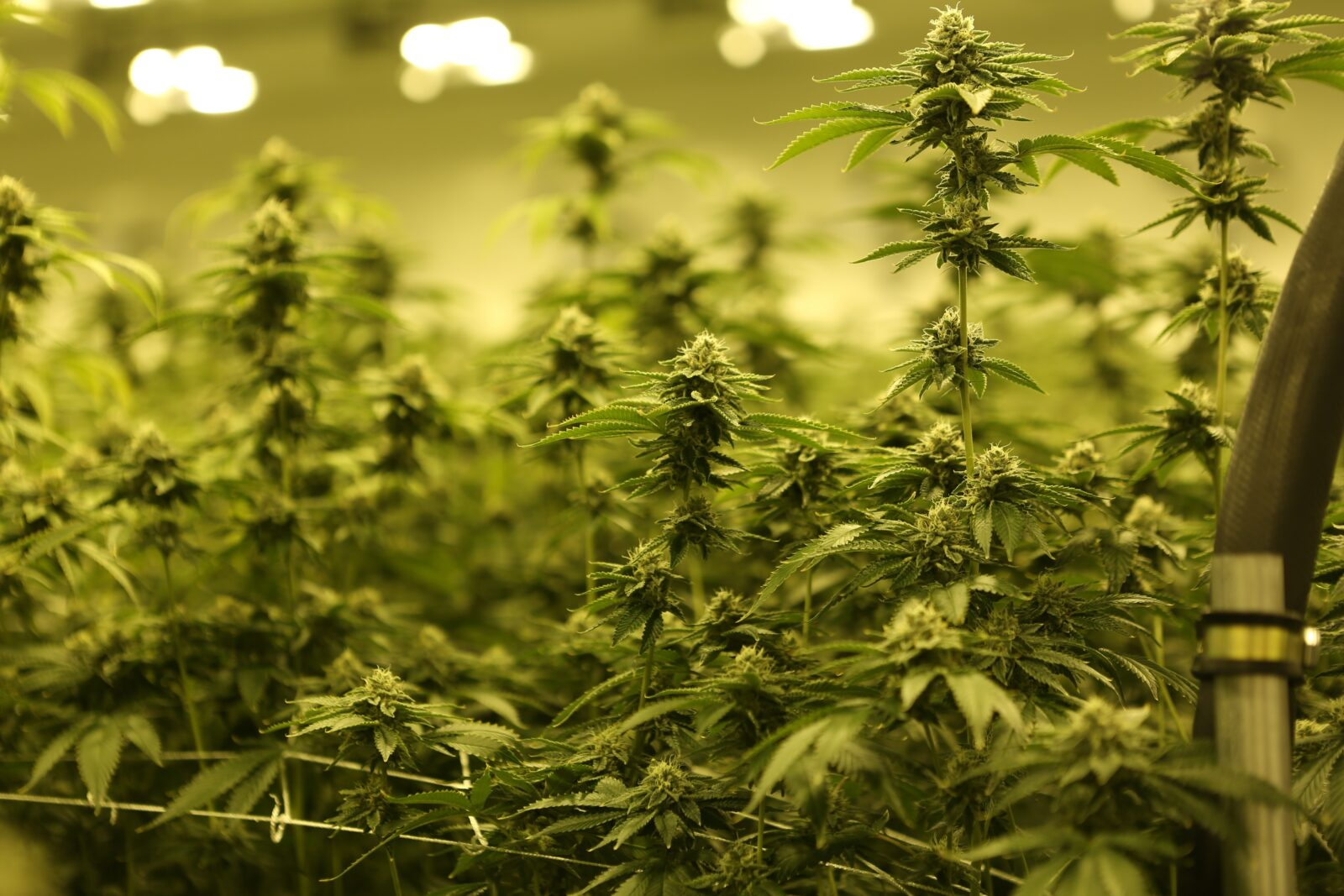 How to pick an MEP engineering partner for your grow facility